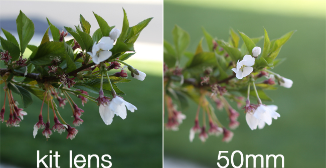 get better photos on auto with a 50mm lens | photography review