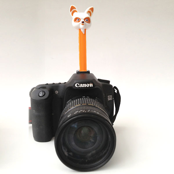 photography tips: give kids a reason to look at the camera{PEZ!}