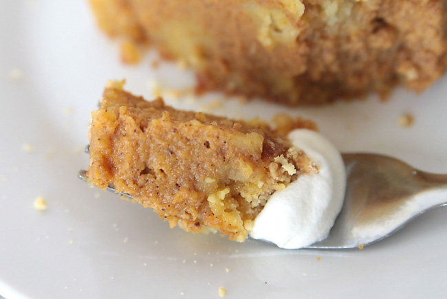 easy pumpkin pie cake recipe: this is even better than pumpkin pie! great for holiday dinners